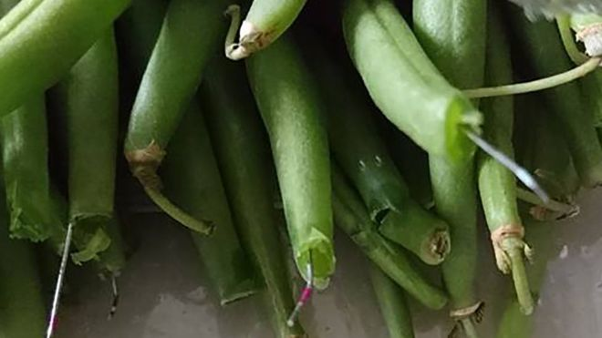 Metal Found In Morrisons Green Beans